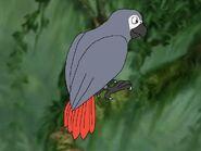 Rileys Adventures African Grey Parrot