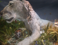 Toledo Zoo European Cave Lion