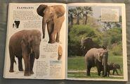 DK Encyclopedia Of Animals (75)