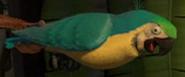 Madagascar 2 Macaw