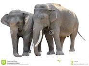 Pair of Asian Elephants