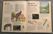 The Kingfisher First Animal Encyclopedia (23)