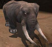 Elephant IC