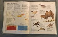 Macmillan Animal Encyclopedia for Children (18)