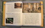 Scholastic Encyclopedia Of Animals (8)