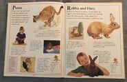 The Kingfisher First Animal Encyclopedia (55)