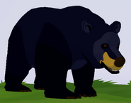 American Black Bear WOZ