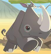 Rhino aj