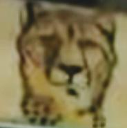 SML Cheetah