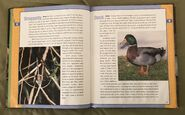 Scholastic Encyclopedia Of Animals (16)