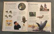 The Kingfisher First Animal Encyclopedia (17)