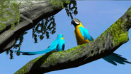 ZTXBOX Blue and Gold Macaw