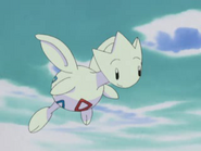 Misty's Togetic