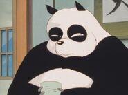 Ranma Panda Bear