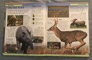 DK First Animal Encyclopedia (16)