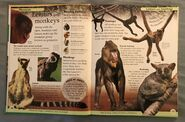 DK First Animal Encyclopedia (3)