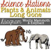 Diagram Mammoth vs Elephant