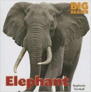 Elephant A Beast So Big Strong and Dangerous