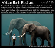Paleoxodon African Bush Elephant and the Woolly Mammoth