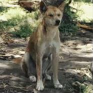 Blinky bills ghost cave - dingo