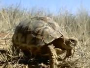 Amazing-animals-activity-center-turtle