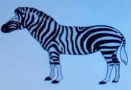 Batw-animal encyclopedia-zebra