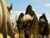 Chino and the Buffalos