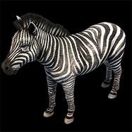 Zebra aoe2DE