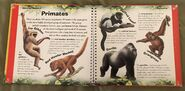 Amazing Animals (Valerie Davies) (1)