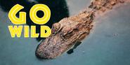 Animal Adventure Park Alligator