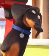 Buddy in The Secret Life of Pets