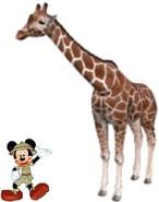 Mickey meets Reticulated Giraffe