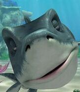 Troy the Shark