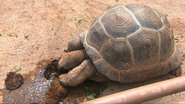 Tulsa Zoo Tortoise