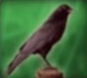Bird-disneythinkfast