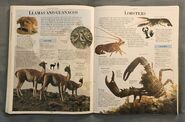 DK Encyclopedia Of Animals (108)