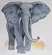 Elephant usborne my first thousand words