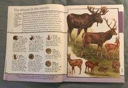 Fantastic World of Animals (11)