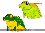 Green Yellow and Lime Frog ty-the-tasmanian-tiger