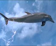 MMHM Dolphin