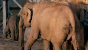 TSLOTZ Elephant