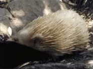 Blinky bills ghost cave - echidna