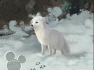 Little Einsteins Arctic Fox