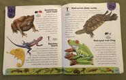 Reptiles and Amphibians Dictionary (19)