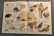 The Animal Atlas (14)