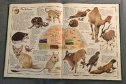 The Animal Atlas (14)