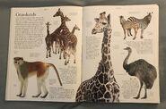 DK Encyclopedia Of Animals (24)