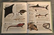 Macmillan Animal Encyclopedia for Children (42)