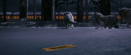 Polar Express Wolves