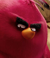 Terence in The Angry Birds Movie